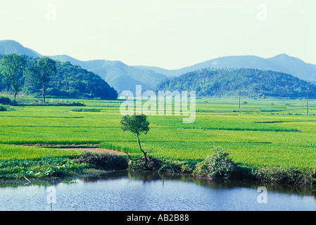 Rural scene of rice fields mountains and a pond in Xiangtan Hunan China - Stock Photo