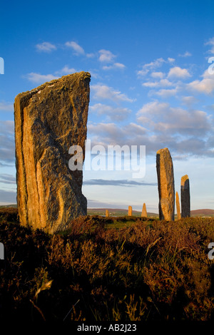 dh  RING OF BRODGAR ORKNEY Neolithic standing stones henge circle with heather - Stock Photo