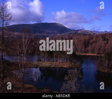Tarn Hows clear winter day with Wetherlam rising up in the background near Coniston  Lake District Cumbria England - Stock Photo