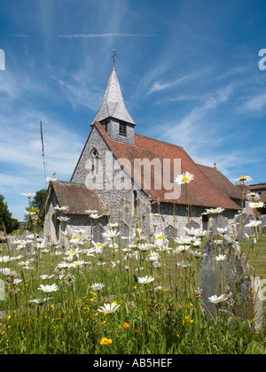 PARISH CHURCH of ST MARGARETS with Oxeye Daisies Eartham West Sussex England UK - Stock Photo