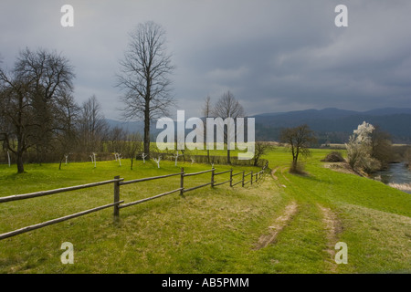 Green grass backyard field - Stock Photo