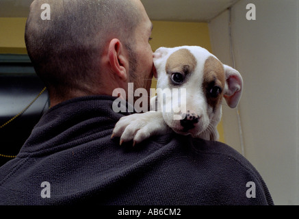 Man holding his Staffordshire terrier puppy over his shoulder. - Stock Photo
