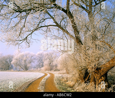 GB - GLOUCESTERSHIRE:  Winter Scene in the Cotswolds - Stock Photo
