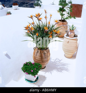 Tropical flowers and plants growing in clay pots on a Santorini flat white rooftop, Greece - Stock Photo