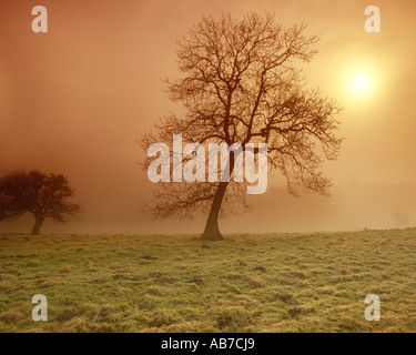 GB - GLOUCESTERSHIRE:  Autum in the Cotswolds - Stock Photo