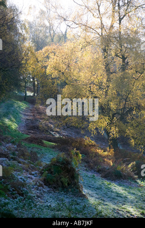 A frosty path early on a Winter morning on the Malvern Hills in Worcestershire UK November 2005 - Stock Photo