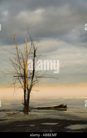 Single tree and fog over lake vertical - Stock Photo