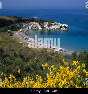West Coast bay with sun-beds umbrellas people and yellow flowers in foreground Kalamia Beach Cephalonia Island Greek - Stock Photo