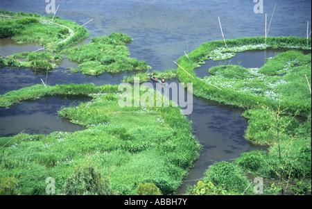 Circular fishtraps in the important wetlands of Logtak (loktak)Lake in Manipur ,north east India - Stock Photo