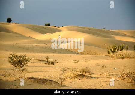Sanddunes in wide open Thar desert near Jaisalmer Rajasthan India - Stock Photo