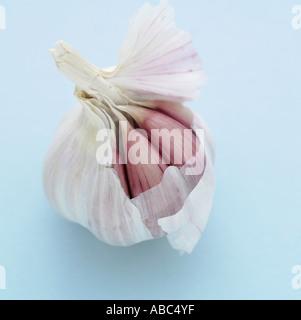 Garlic on pale blue background - Stock Photo