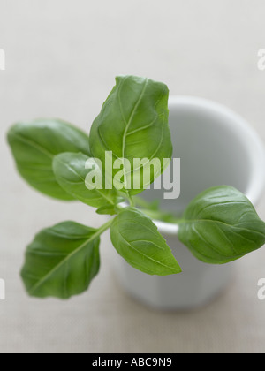 Basil in ceramic bowl on pale linen - high end Hasselblad 61mb digital image - Stock Photo