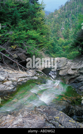 Nancy Brook Scenic Area White Mountain N F View from the top of Nancy Cascades Waterfalls Livermore NH - Stock Photo