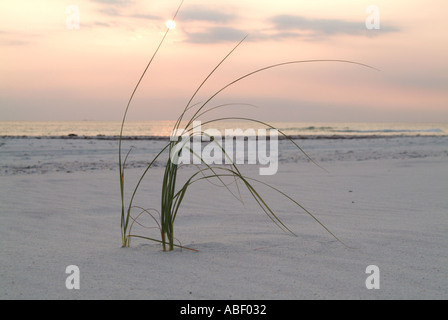 Grasses and vegetation growing from beach sand at St.Joseph's Peninsula State Park FL - Stock Photo