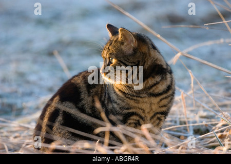 Domestic cat sitting in winter - Stock Photo