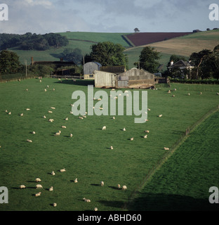 Rolling countryside with pasture sheep trees and arable farmland in distance on fine autumn day Devon - Stock Photo
