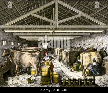 Farm women milking and pouring milk into a churn in dairy barn. Hand-colored engraving - Stock Photo