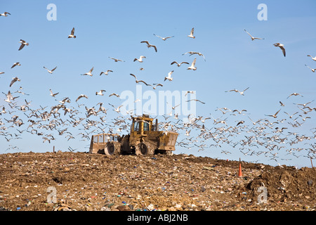 UK Landfill Site with Earthmover and circling Gulls - Stock Photo