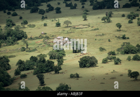 Lolgorian, Kenya. Maasai boma compound - family farmstead - in pastureland with cattle grazing. - Stock Photo