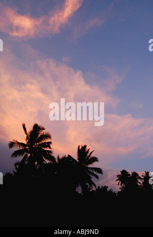 Palmtrees at sunset - Sri Lanka - Stock Photo