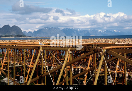 PICTURE CREDIT DOUG BLANE Lofoten Norway - Stock Photo