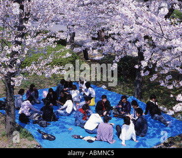 Japanese people enjoying a cherry blossom viewing party in the grounds of Osaka castle - Stock Photo