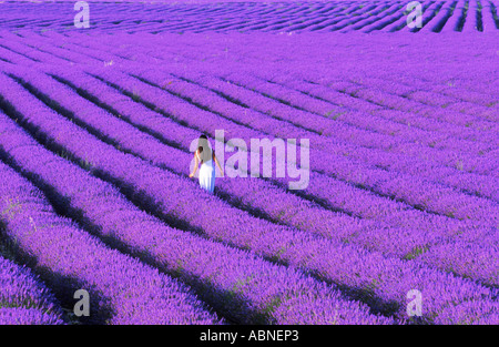 French woman in fields of lavender in Provence - Stock Photo