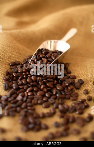 Scoop of coffee beans on burlap surface - Stock Photo