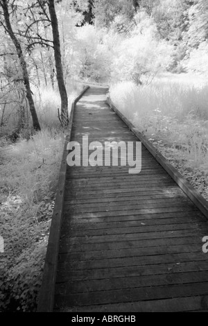 Pathway through the forest - Stock Photo