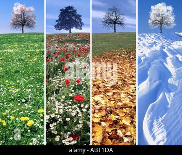 DIGITAL ART: The Four Seasons - Stock Photo