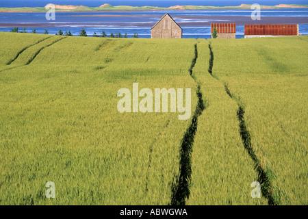 Farm field and buildings near New London Bay, Prince Edward Island, Canada. - Stock Photo