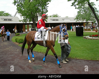 Thoroughbred & Jockey - Stock Photo
