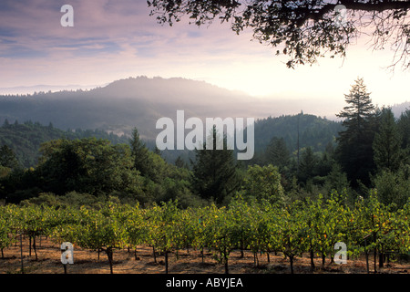 Morning light over wine vineyard in the hills along Mount Veeder Road Napa Caounty California  - Stock Photo