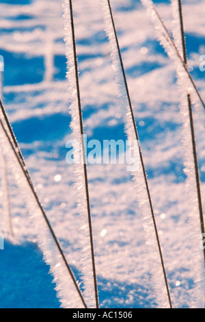 Frostwork on blades of grass Germany - Stock Photo