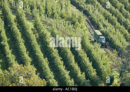 Tractors transporting Vinschgau apples through rows of trees, Alto Adige, Italy - Stock Photo