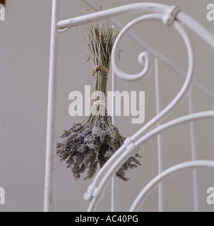 Dried lavender bunch hanging on wrought iron bed frame - Stock Photo