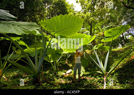 A young woman watching Upright Elephant Ear leaves (Mexico). Jeune femme observant des feuilles d'alocasia (Mexique). - Stock Photo