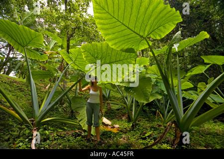 A young woman watching Upright Elephant Ear leaves (Mexico). Jeune femme observant des feuilles d'alocasia (Mexique). - Stock Photo