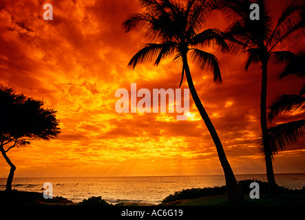 palm tree, palm trees, sunset, Ulua Beach, town of Wailea, Maui, Maui Island, Hawaii, United States - Stock Photo