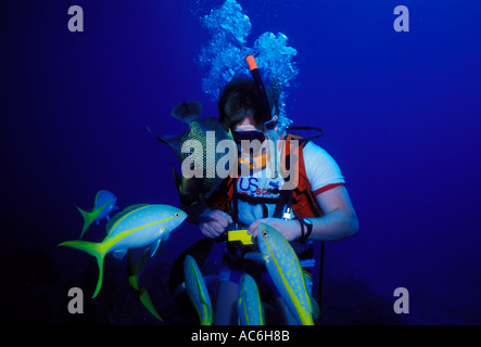 Scuba diver photographing, Yellowtail Snapper, French Angelfish, Grand Cayman Island, Cayman Islands, Caribbean - Stock Photo