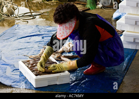 Korean woman packing squid on piers cheongjin fishing for Fishing docks near me