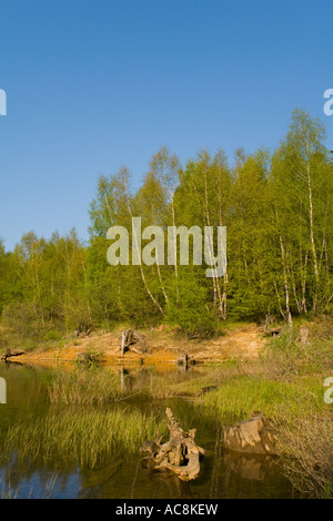 Riverside vegetation in Spring, Lepenica lake, Croatia - Stock Photo