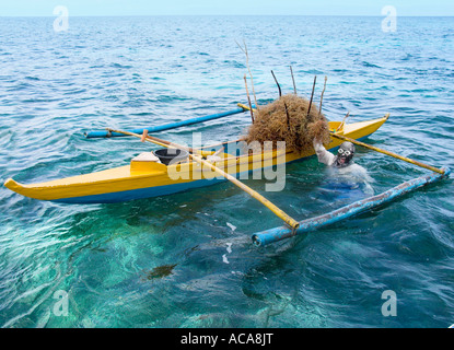 Philippine diver harvesting seaweed, Philippines, Pacific Ocean, Southeast Asia - Stock Photo