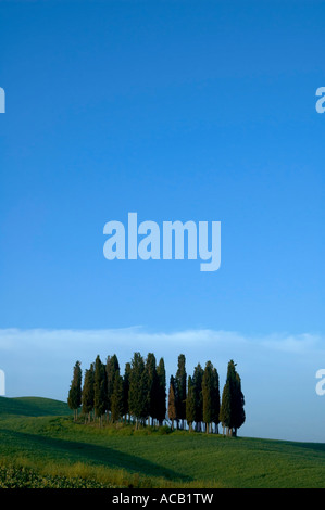 Pine trees on ridge in the Tuscany region of Italy - Stock Photo