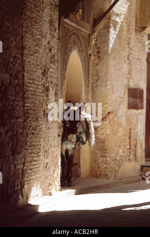 Donkey laden with blankets tethered in stone archway, Fes el bali (the medina), Fes, Morocco, North Africa - Stock Photo