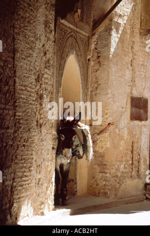 Loaded donkey tetchered under ancient stone archway in the medina, Fes el bali  Fes, Morocco, north Africa - Stock Photo