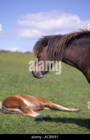Mother and Foal - Stock Photo