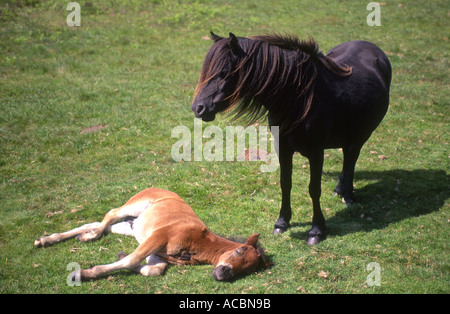 Pony and Foal - Stock Photo