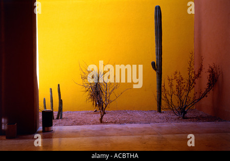 cacti at lobby of hotel state of baja california sur mexico - Stock Photo
