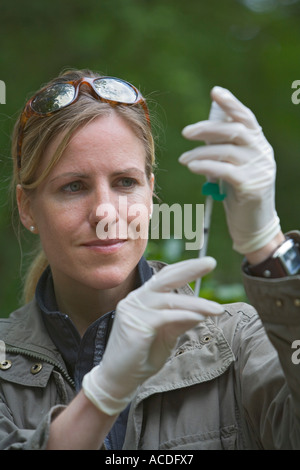 Zoo veterinary Dr. Sandra Silinski filling a syringe with a serum against bird flu to protect zoo birds from infection - Stock Photo